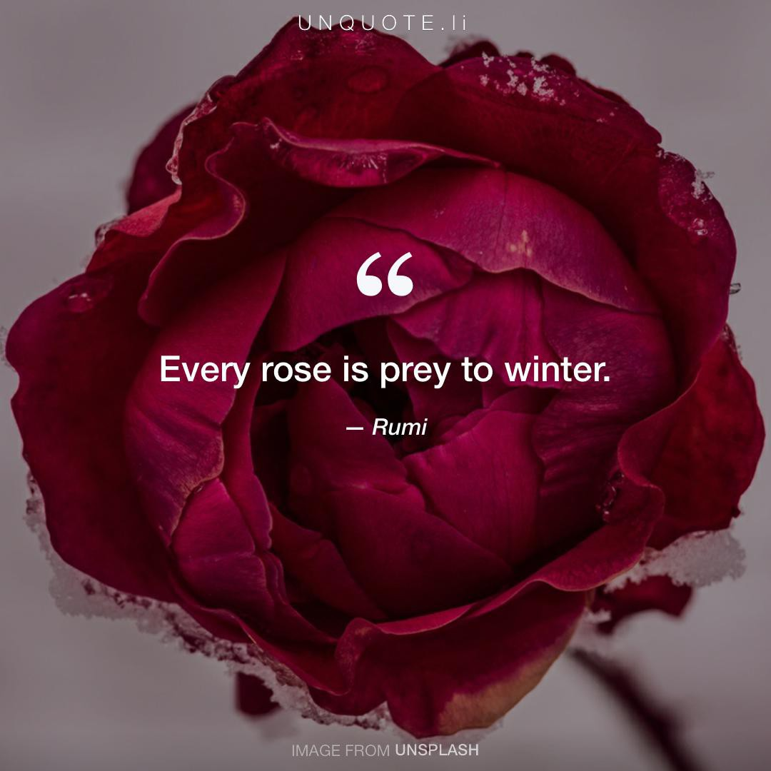 Every Rose Is Prey To Winter Quote From Rumi Unquote