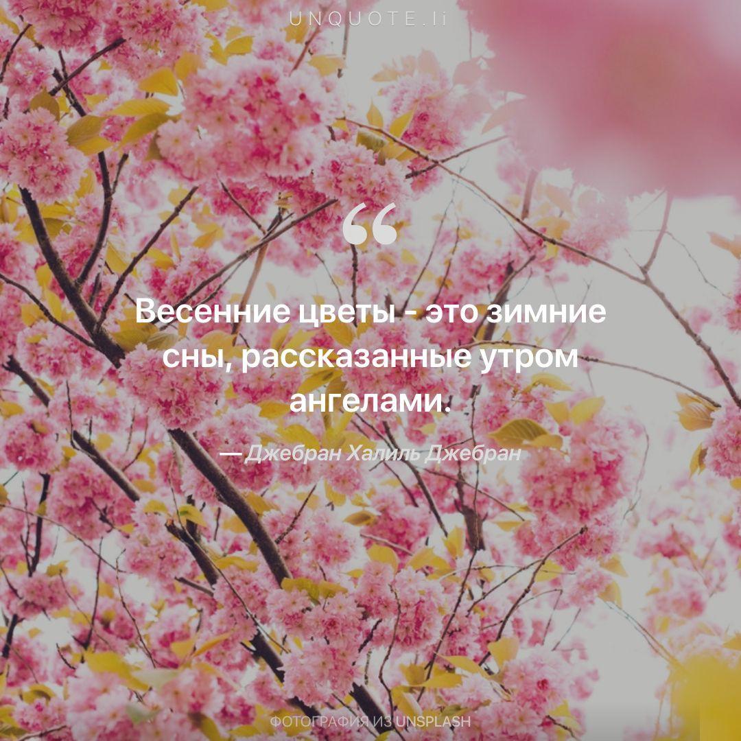 Цитата к цветов 71