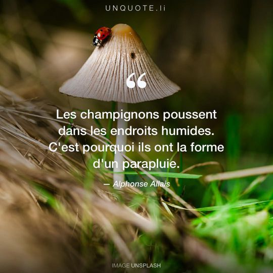 Image d'Unsplash remixée avec citation de Alphonse Allais.