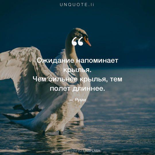 Фотографии от Unsplash цитата: Руми.