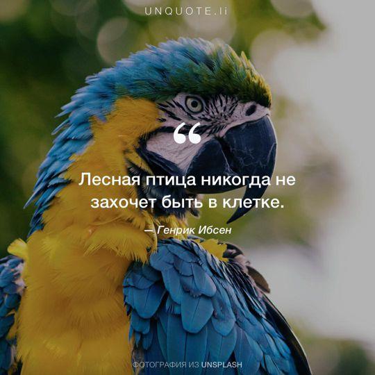 Фотографии от Unsplash цитата: Генрик Ибсен.