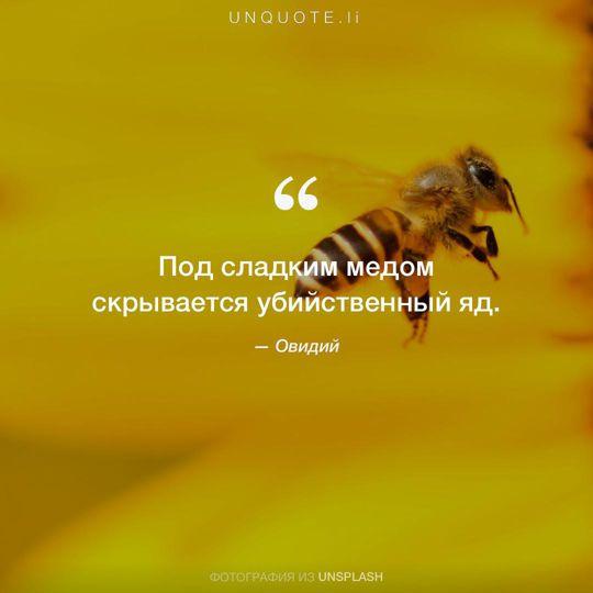 Фотографии от Unsplash цитата: Овидий.